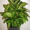 House plant.