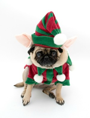 A pug dog dressed up like an elf.