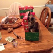 Kitten on the dining table in a gift box.