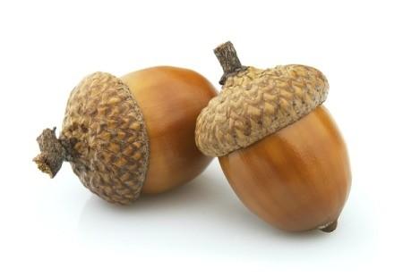 two acorns