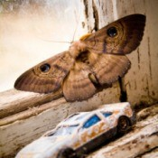 Photo of a beautiful moth.