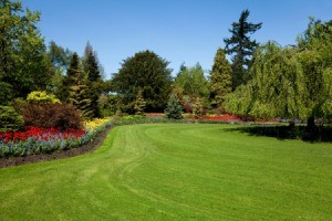 A beautiful yard.