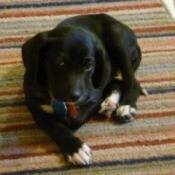 Abby (Dog)