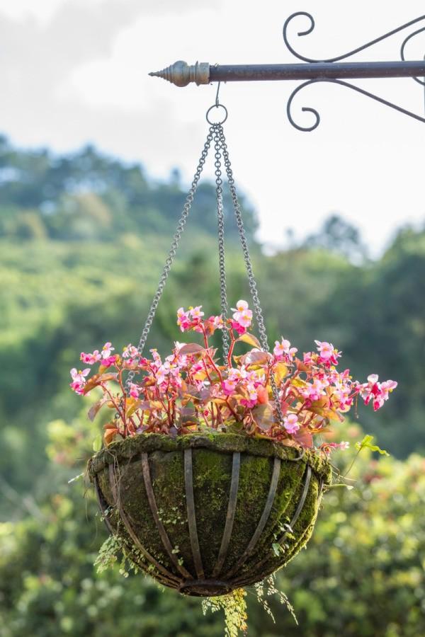 Creating Hanging Baskets Thriftyfun