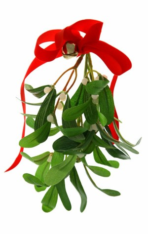 Fresh Mistletoe