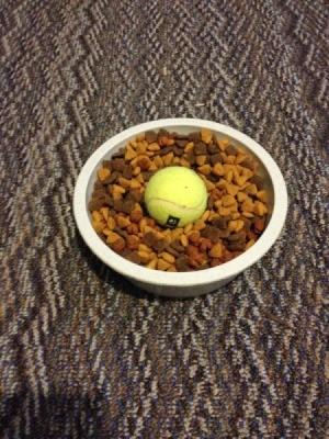 Tennis ball in dog food dish.