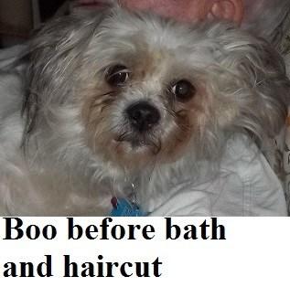 Boo (Dog)
