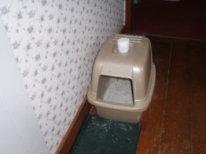 Keep Your Litter Box Fresh - container of baking soda on top of litter box