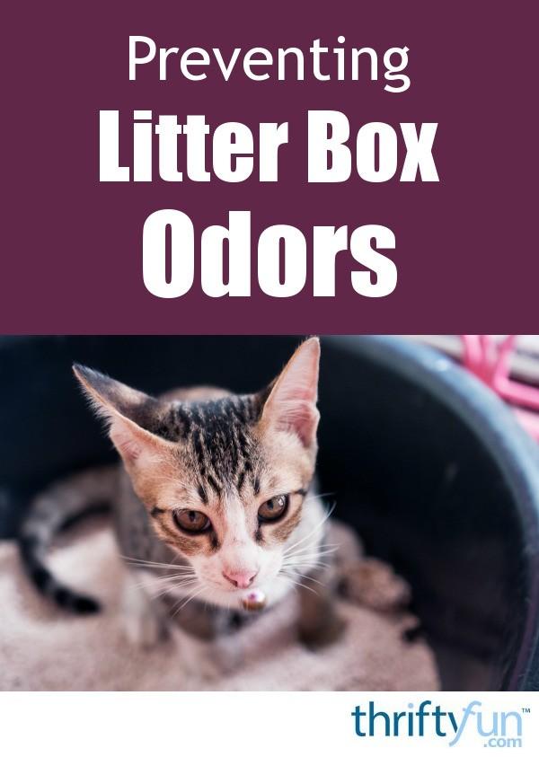 Preventing Litter Box Odors Thriftyfun