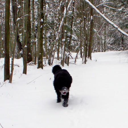 Pluto in the snow walking towards camera.