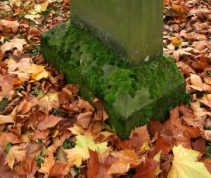 Moss on Headstone