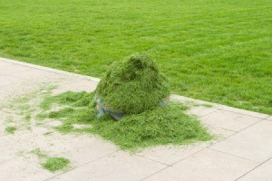 Grass Clippings On Sidewalk