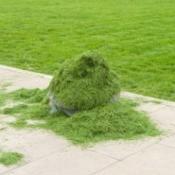 Grass Clippings On Sidewalk