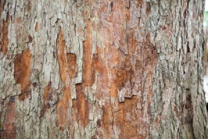 Damaged Tree Bark