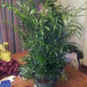 Green narrow leafed plant.
