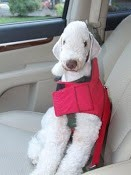Dog on car seat.