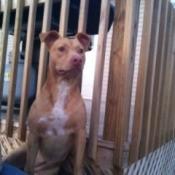 Dog siting near stair railing.