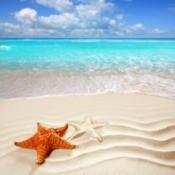 Beach Photo With Starfish