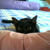 Black cat on bed.