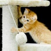 Cat Scratching Sisal Post