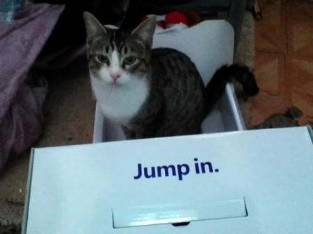 A cat in a box
