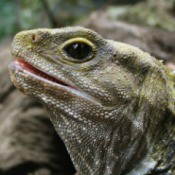 Close up of Lizard