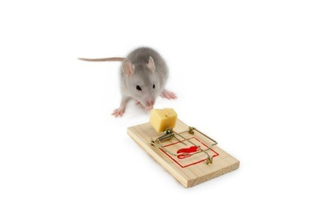 Rodent Trap