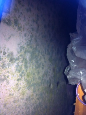 Legal Advice for Mouldy Rented Cottage