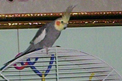 Bird on top of cage.
