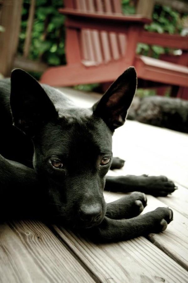 Closeup of dog's head.