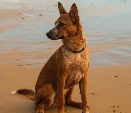 Riley Canoe (Dog)