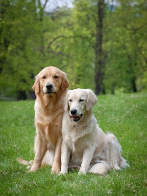 Dogs in Yard with Grass