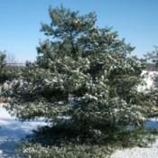 Cold Winter (Mount Vernon, MO)