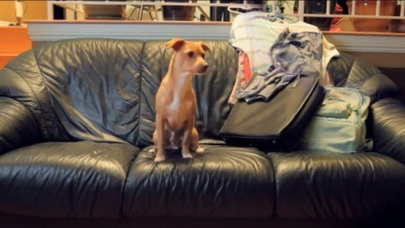 Dog on couch.