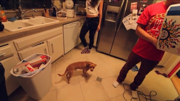 Dog on kitchen floor with several people around.