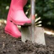 Gardening in Moist Soil