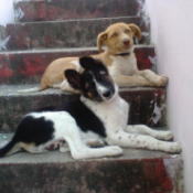 Dog on stairs.