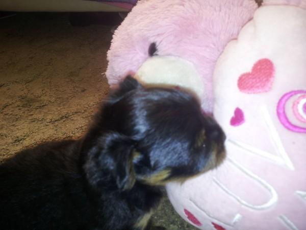 Treating Fleas On A Puppy Thriftyfun