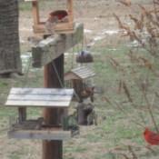Wild Birds at Feeder