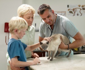 Treating and Vet Examining Cat