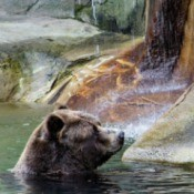 Bear at Cleveland Metroparks Zoo