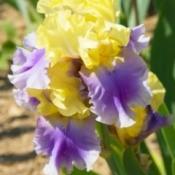 Iris Photos