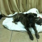 Kota on dog bed.