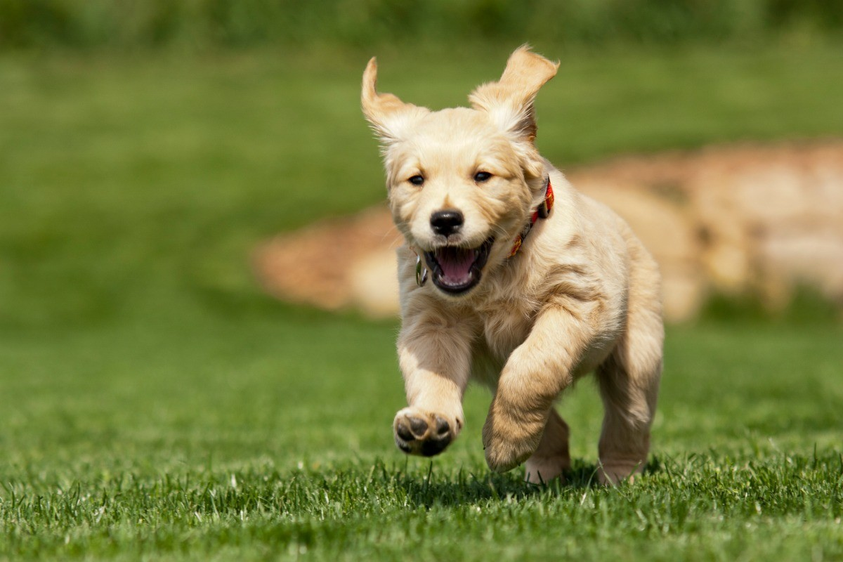 Getting Rid Of Parvo Virus In The Yard And Home Thriftyfun