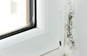 Mold in a Rental House