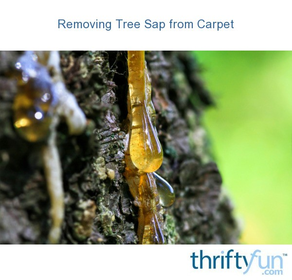 cleaning tree sap from carpet thriftyfun. Black Bedroom Furniture Sets. Home Design Ideas
