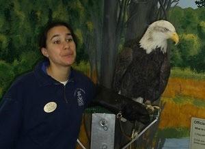 Bald Eagle (Jackson Bottom Wetland Preserve, Hillsboro, OR)