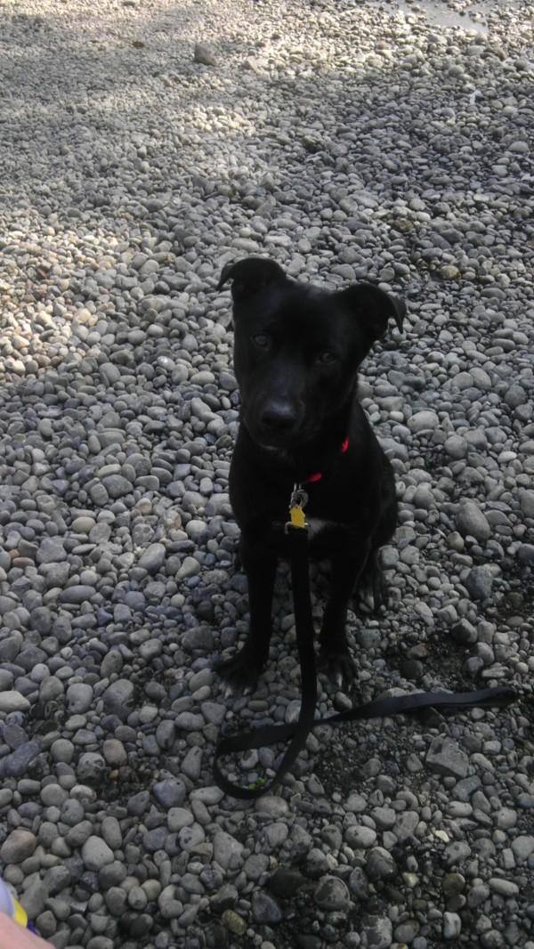 Black dog outside.
