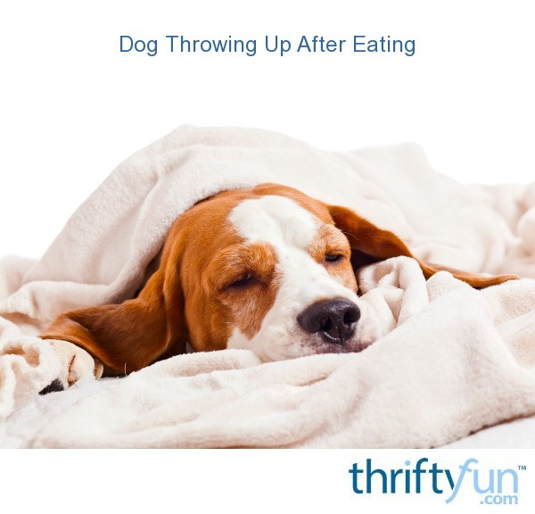Dog Throwing Up After Eating?
