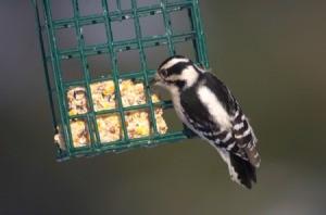Homemade Wild Bird Food